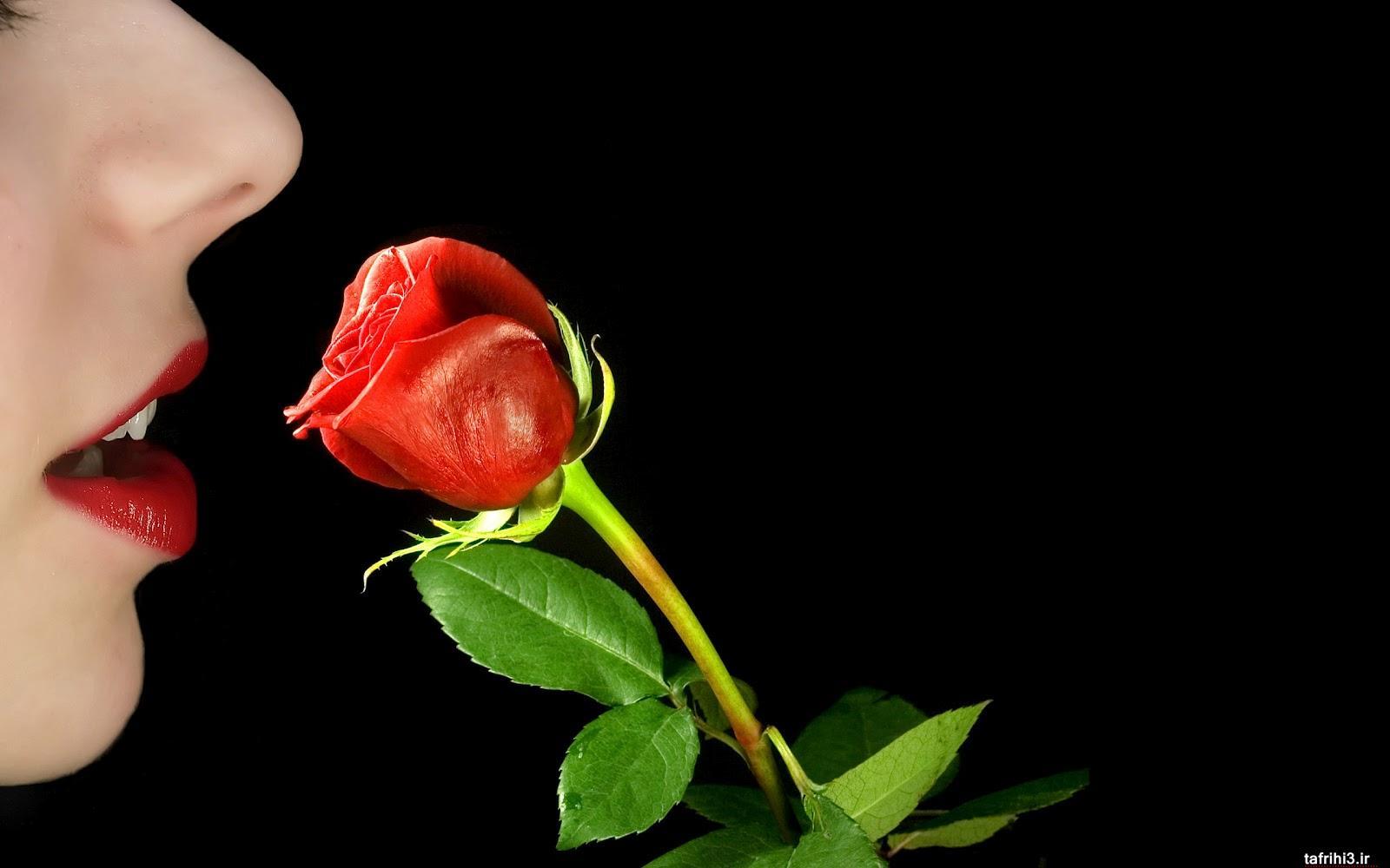 عکس های گل رز قرمز با لب و دست