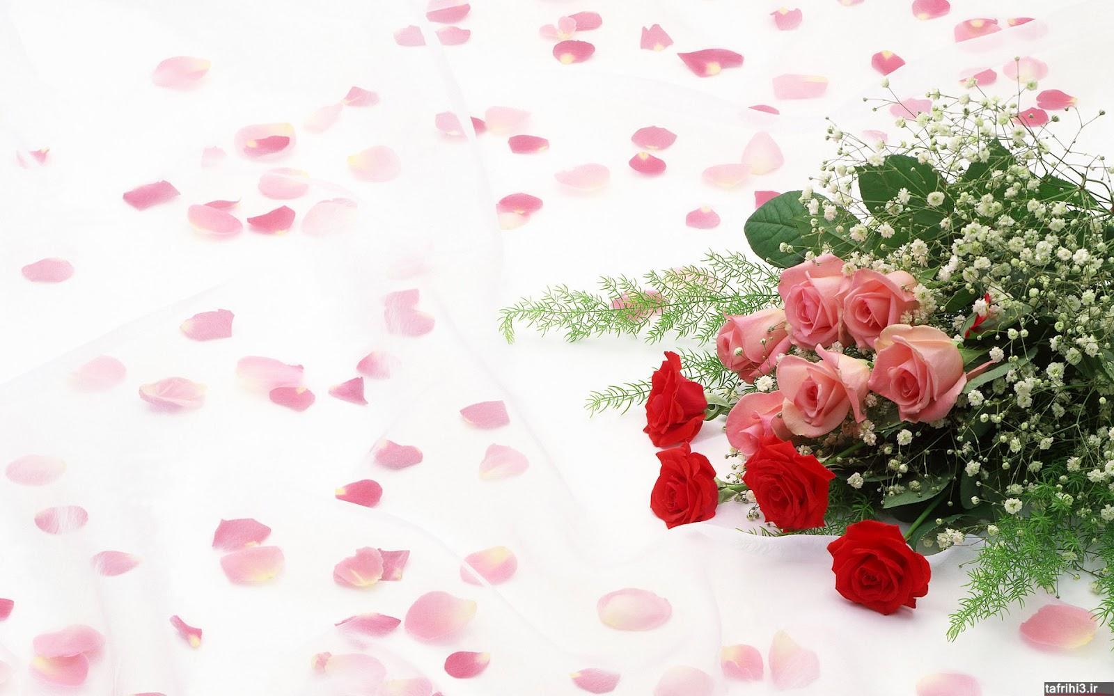 عکس های گل رز قرمز با کیفیت hd