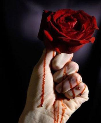 عکس رز گل قرمز