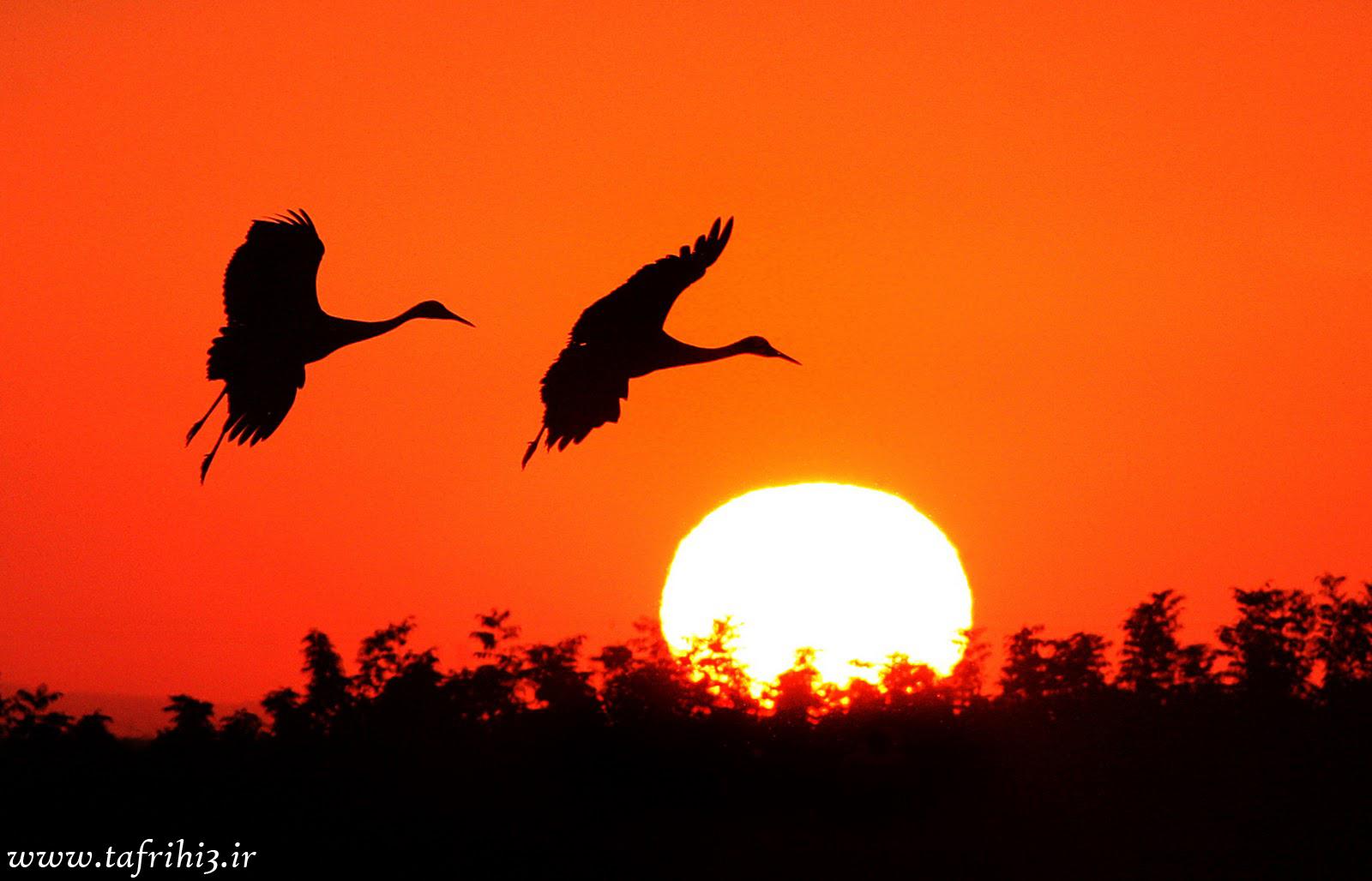 عکس های زیبا و احساسی از غروب آفتاب