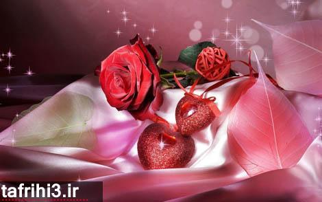 تک عکس عاشقانه گل رز