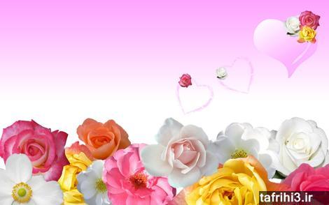 عکس بسیار زیبای عاشقانه گل رز